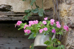 teapot with flowers